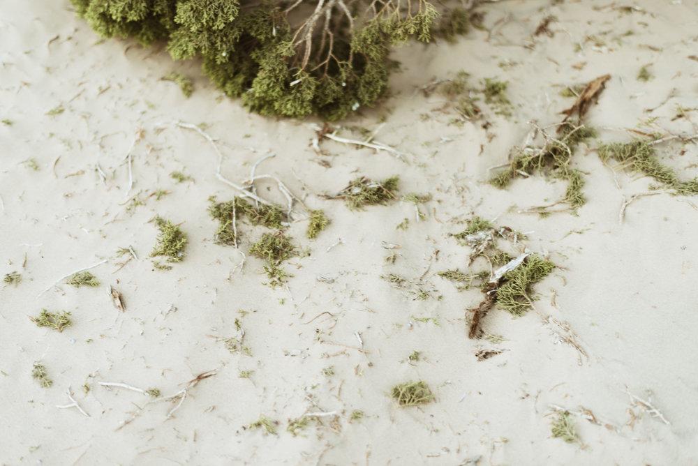 alyssa sorenson sand dunes family-140.jpg