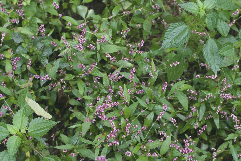 5_Flowers.jpeg