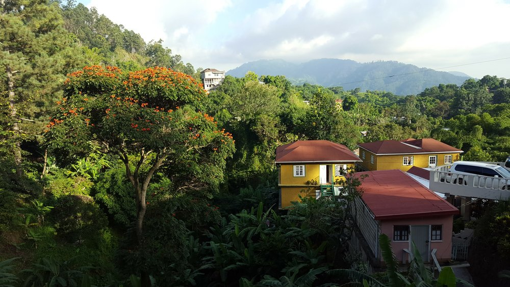 The view from Cafe Blue, home of Jamaica Blue Mountain Coffee, one of the finest, scarcest, most expensive coffee in the world.