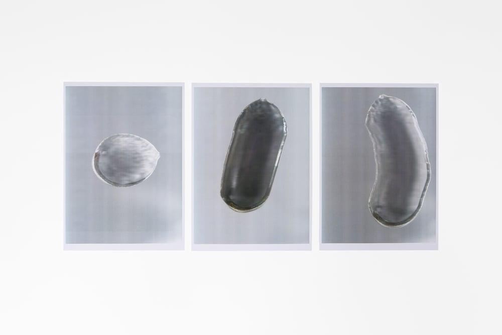A shell2015 detail | Eva Fàbregas