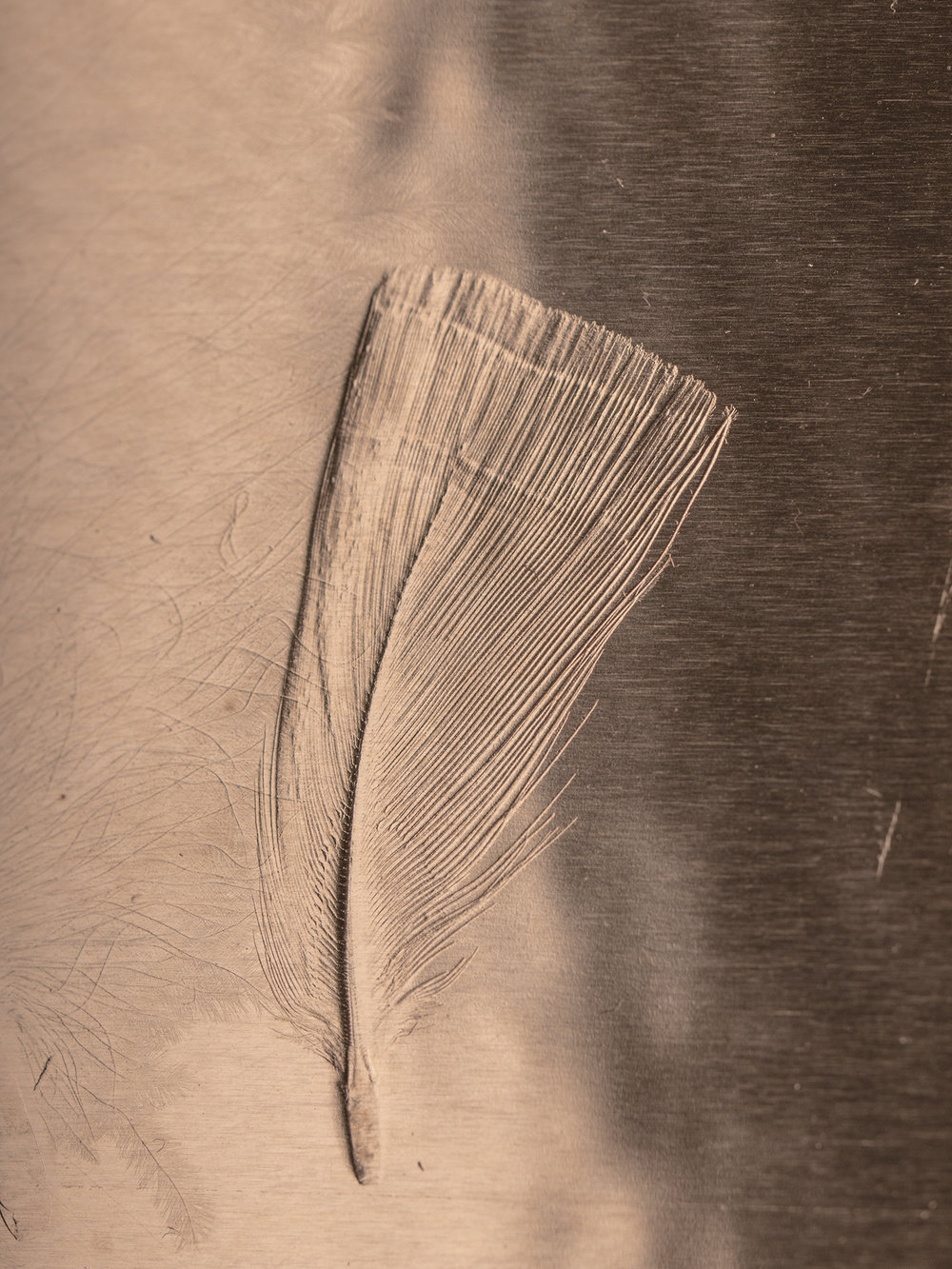Detail Federbild  Detail feather picture