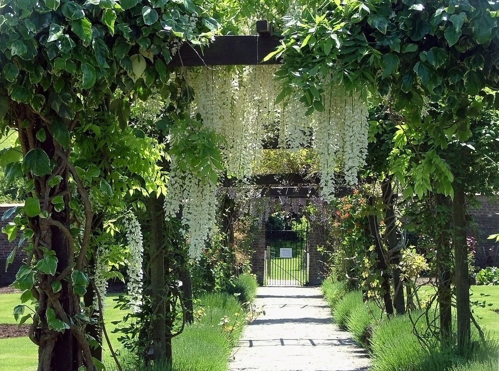 pergola_with_white_wisteria_by_aegiandyad-d4klh71.jpg