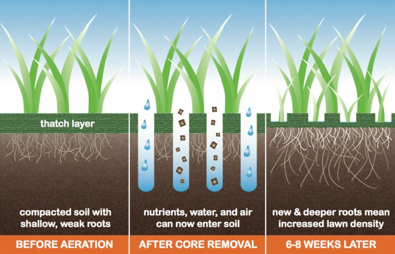 Root System in greens