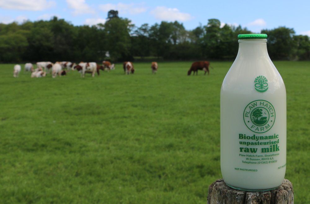Cow Milk.jpg