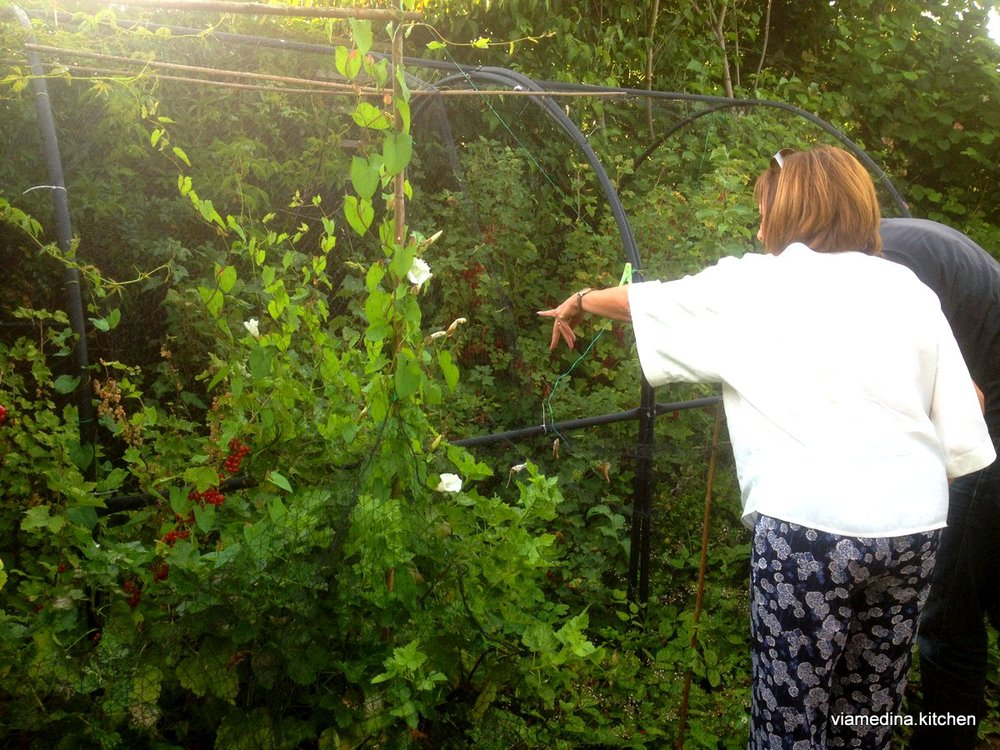Berry nets to stop the birds