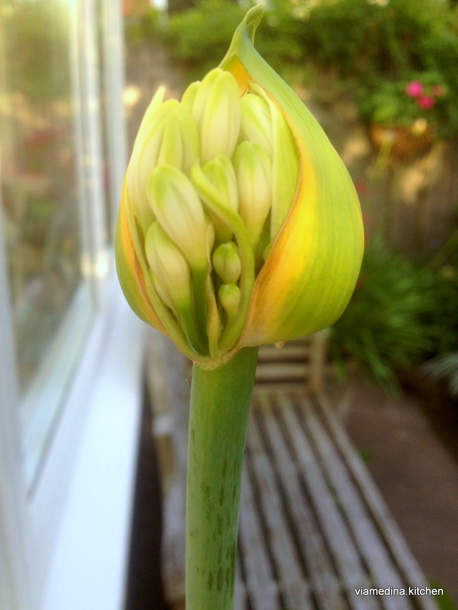 flower bud.JPG