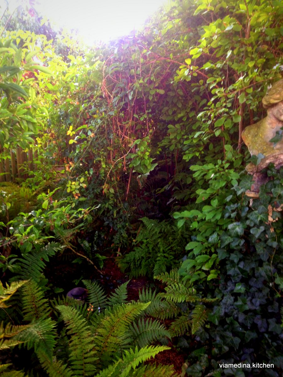 fernery large view.JPG
