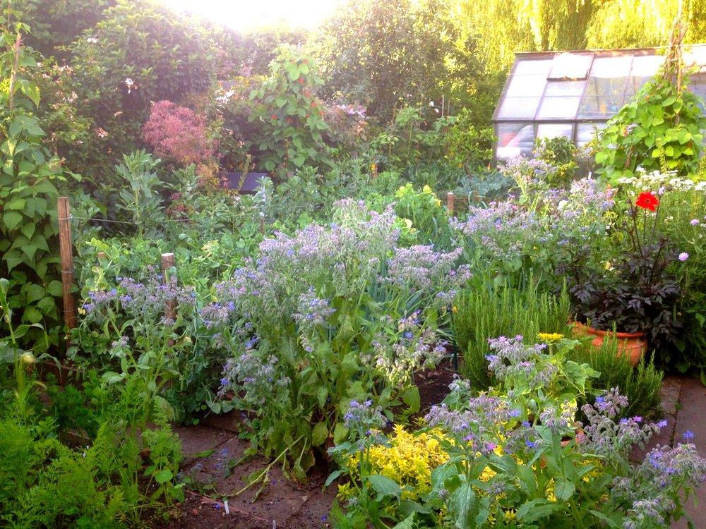 garden back view.JPG