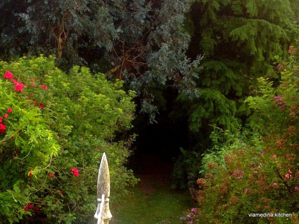 garden high view.JPG