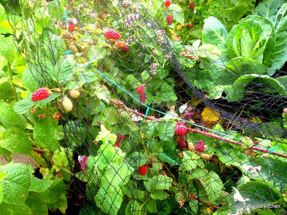 loganberries.JPG