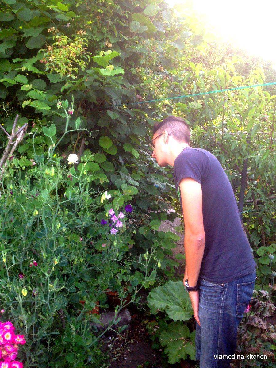pea flowers.JPG