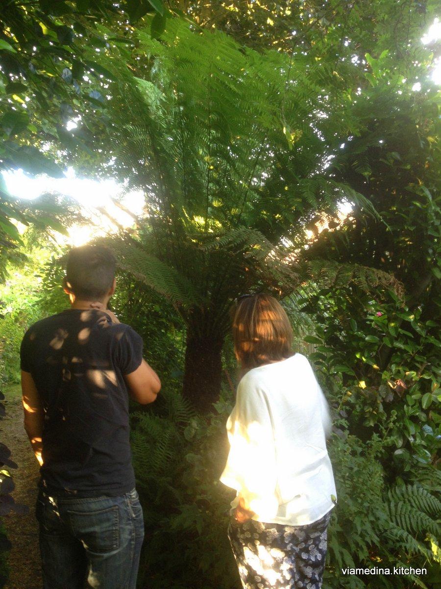 Admiring the Tasmanian Fern