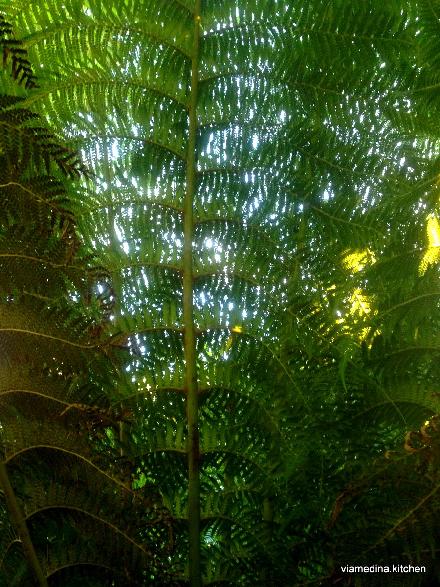tasmanian fern frond.JPG