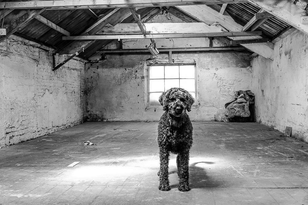 Martin Finnin Art | Moving Out-12