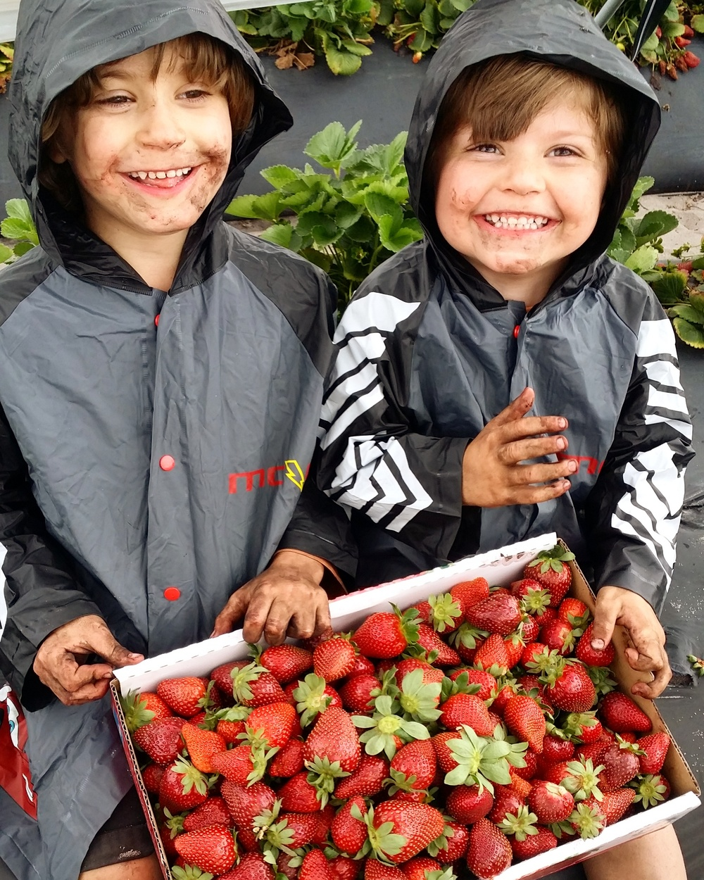 Pick your own strawberries Mama Pyjama