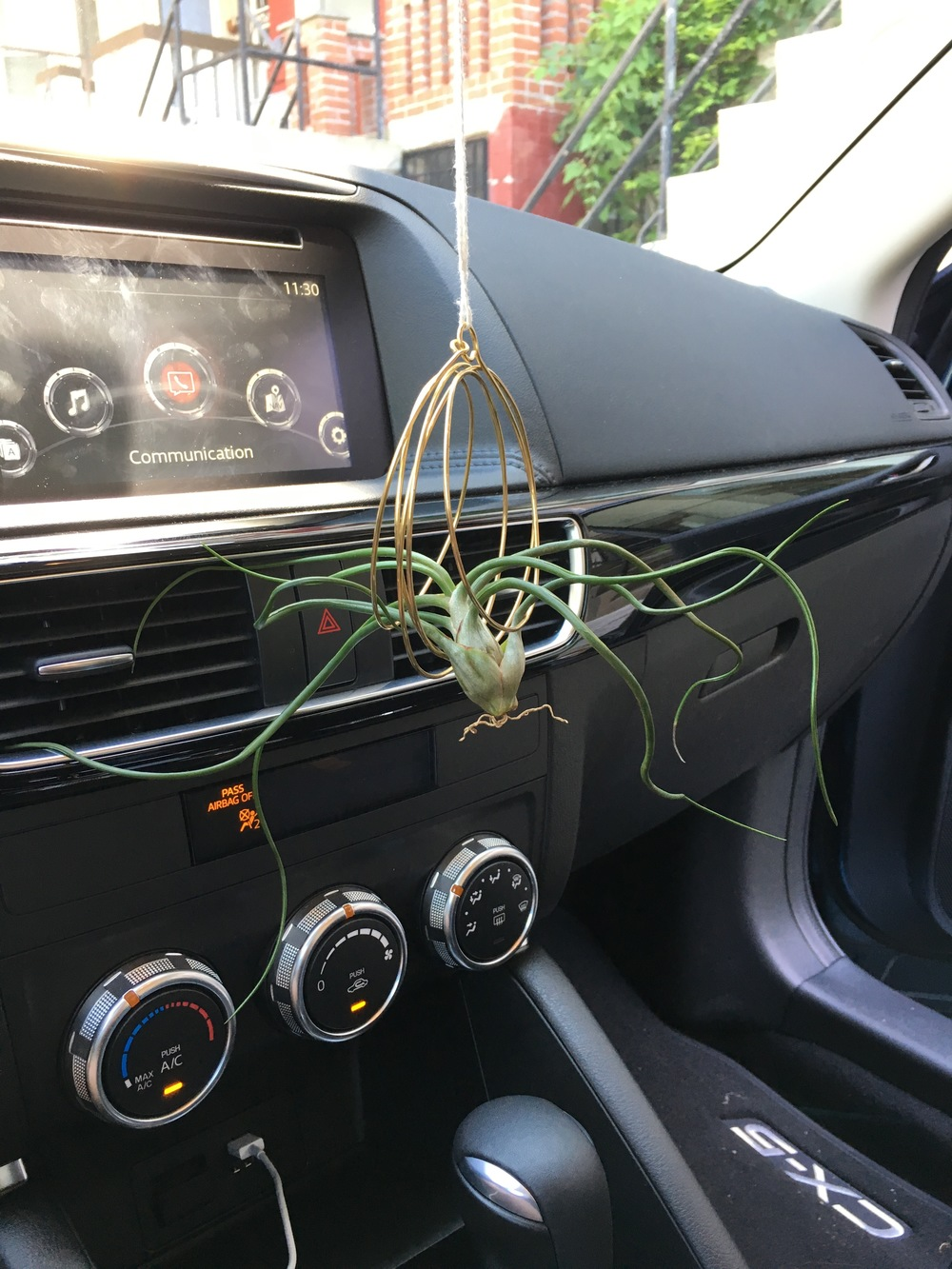 Air Plant Rearview Mirror