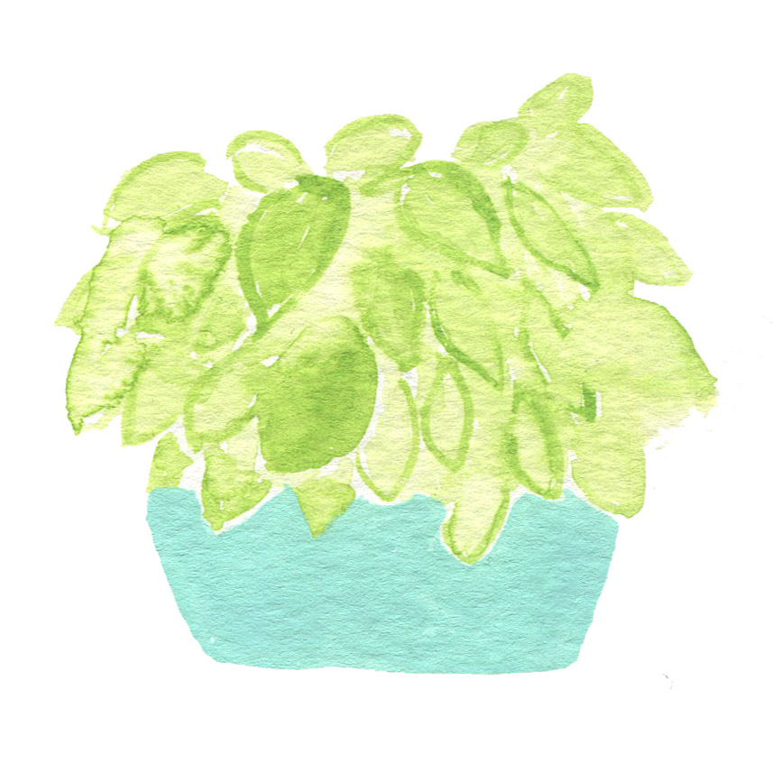 Watercolor Potted Plant.jpg
