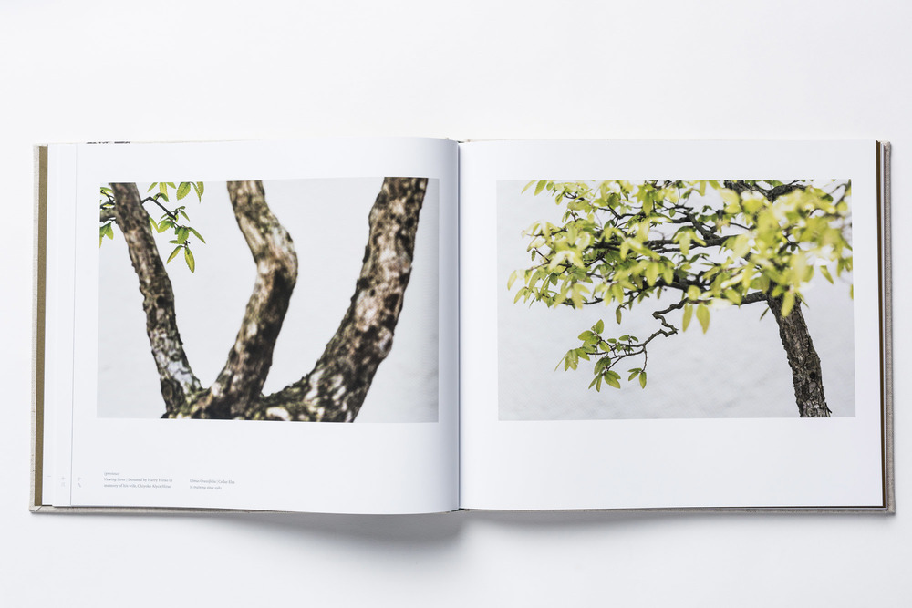bonsai-book-4.jpg