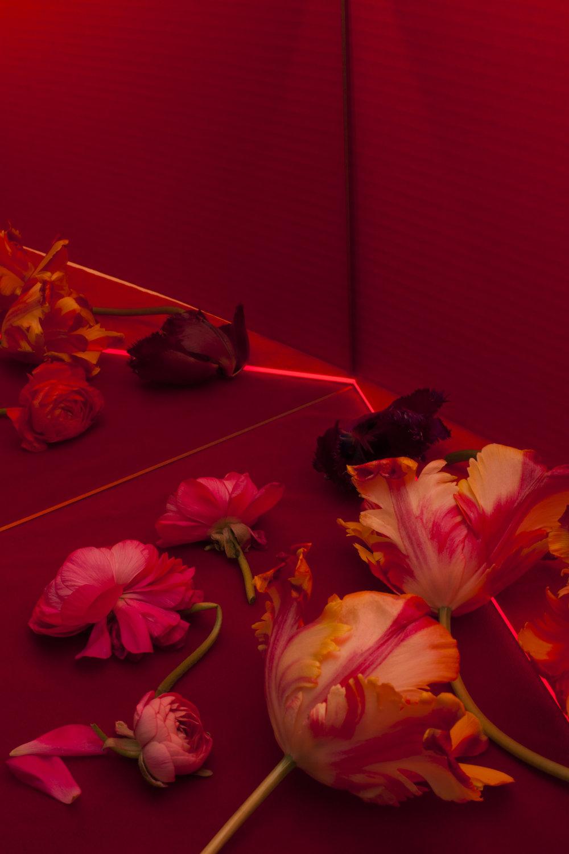 april_blooms455.jpg