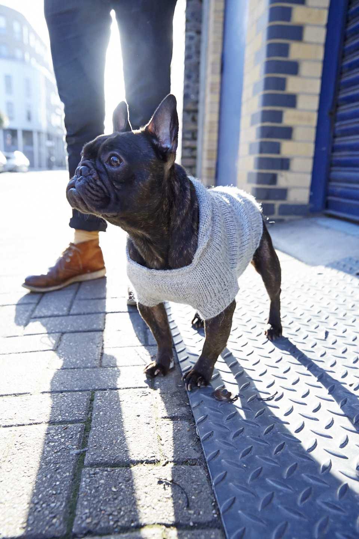 DogCoat_044.jpg