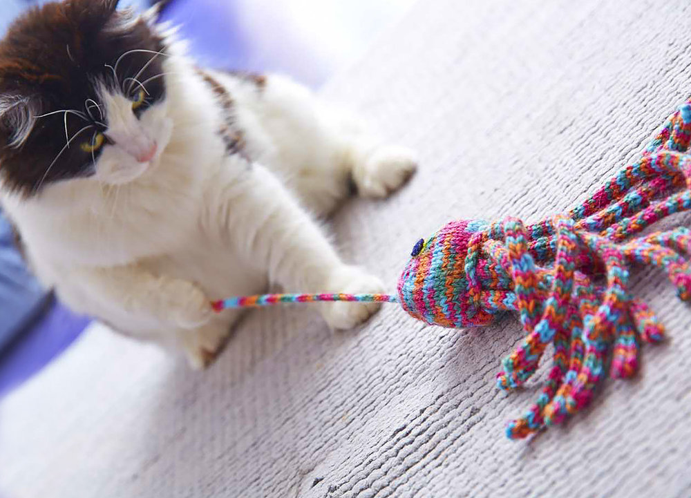 CatToy_039cropWEBSITE..jpg