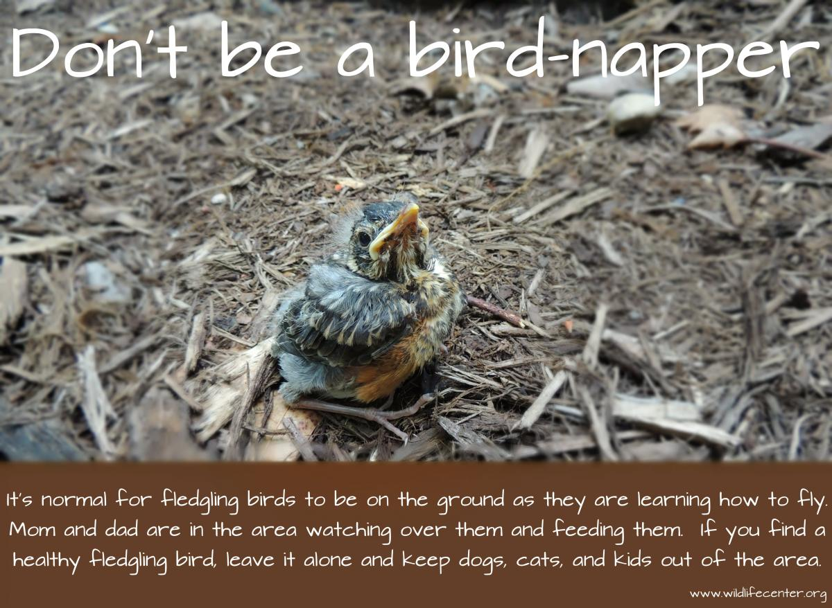 found a baby bird wildlife rehab info u0026 resources u2014 backyard