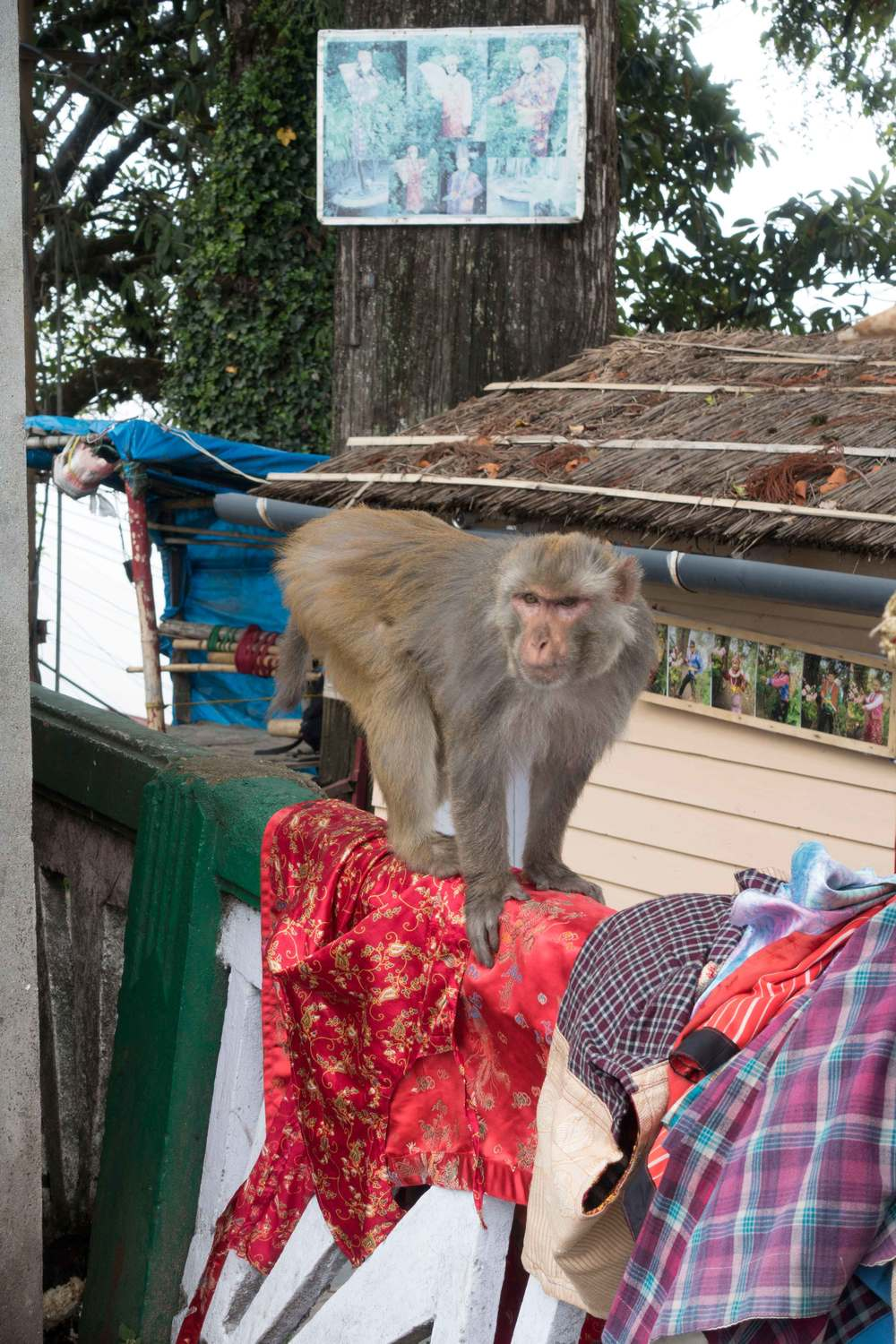 Cheeky monkey in the town square.