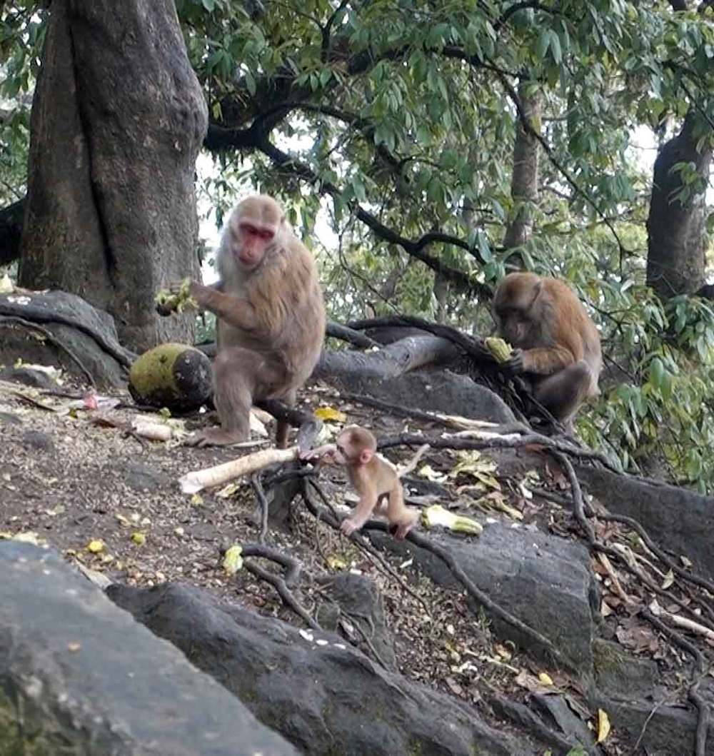 Mama and baby monkey.