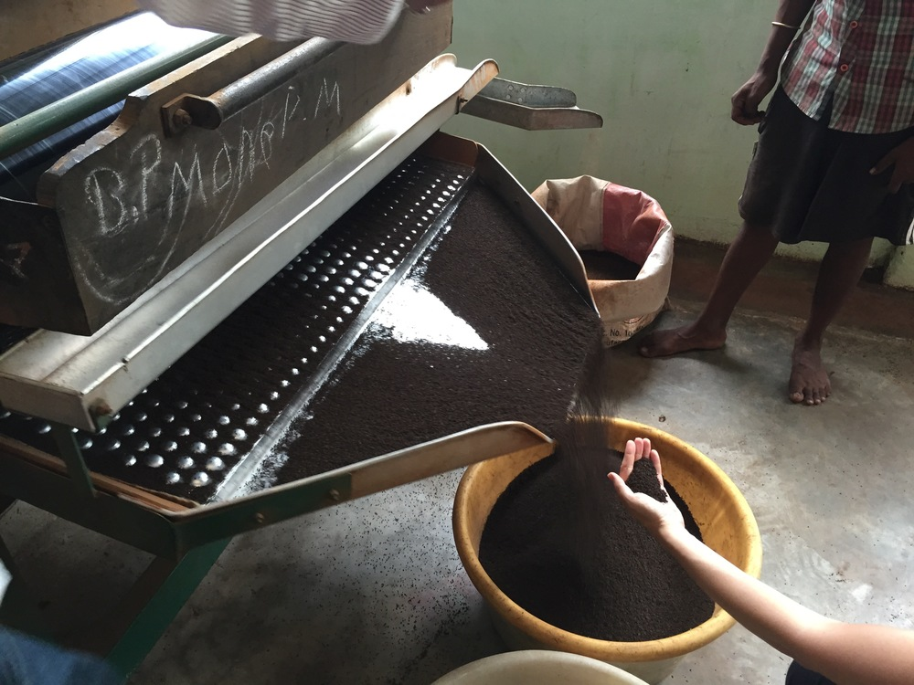 Sorting: The tea is sorted through vibrating sieves into different grades.