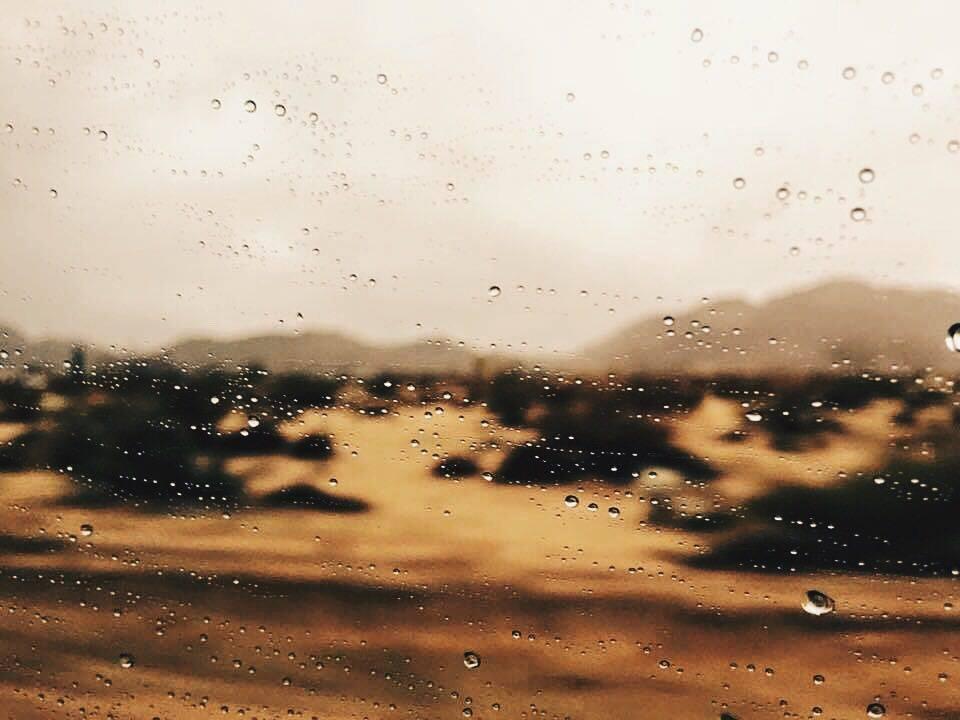 SelectNY - Olivier Rose Van Doorne Acido Dorado_3.jpg