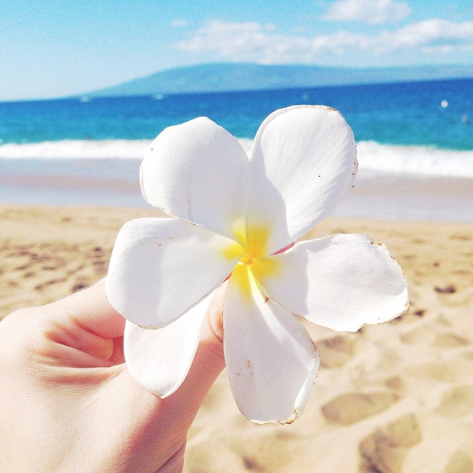 plumeria hawaii flower
