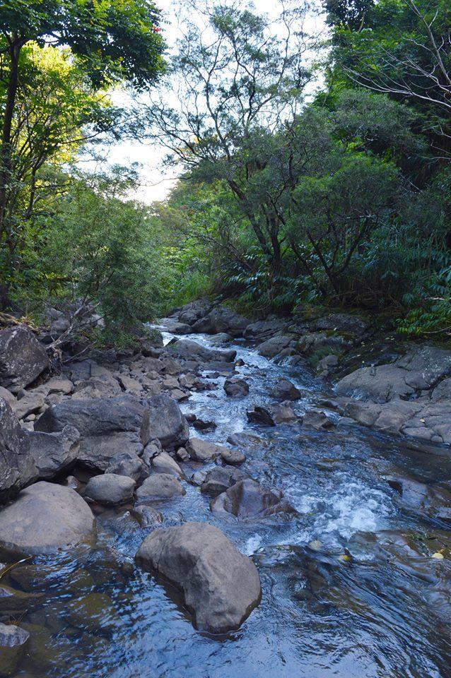 Road to Hana Stream