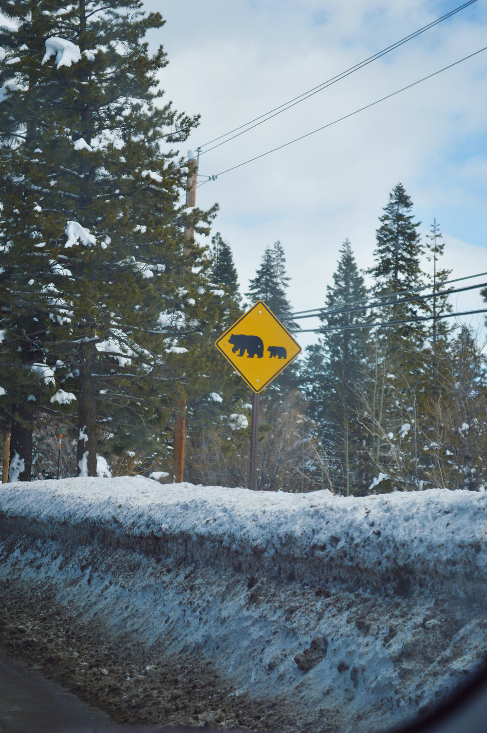 North Lake Tahoe | Tahoe City California | Bear Crossing Sign | Photography by Kristen Laczi