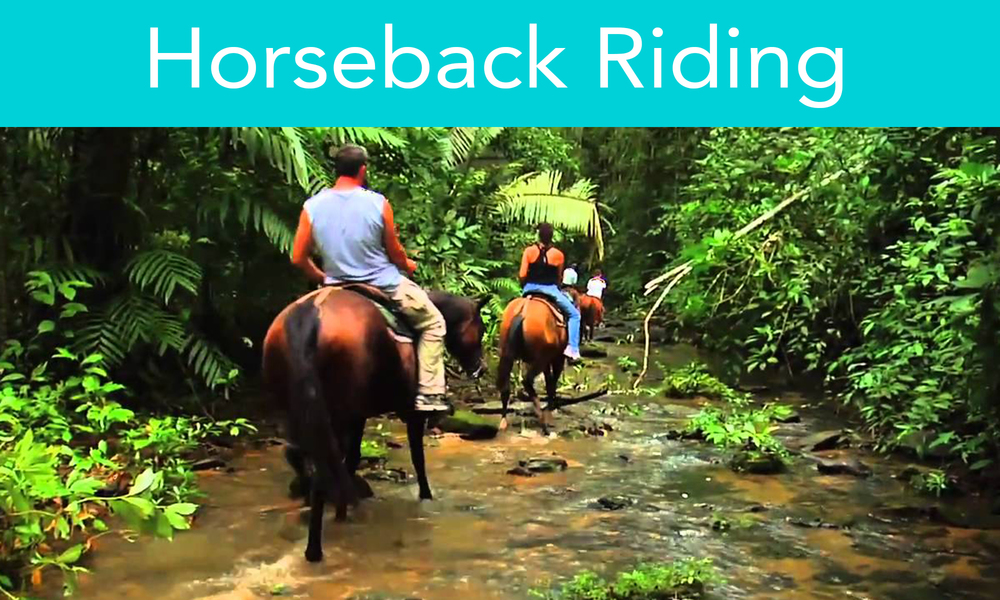 Enjoy beautiful rides through cool forest and wildflower meadows, bordering the Kendal River at the heart of the Blue Maya mountain range. Head out with an experienced guide and horses and learn how the Mayan survived in the jungle and used of exotic rainforest plants for medicinal purposes.