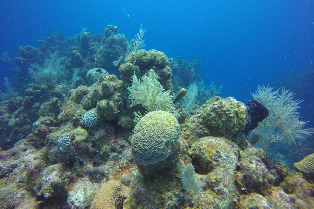 GRAND CHANNEL Snorkel: $125/person Dive: $175/person