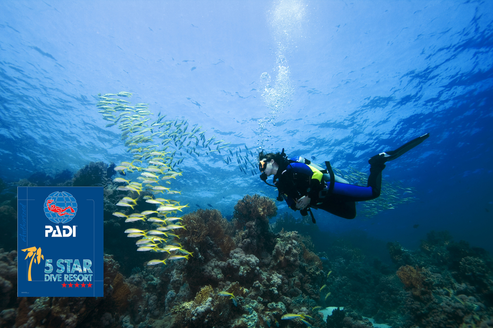 SNORKEL & SCUBA DIVE SCUBA or snorkel the incredible Belize Barrier Reef, fish the abundant flats of Southern Belize, or explore the Maya ruins and jungle. You'll be able to check many things off your bucket list by the time you leave Belize Ocean Club.