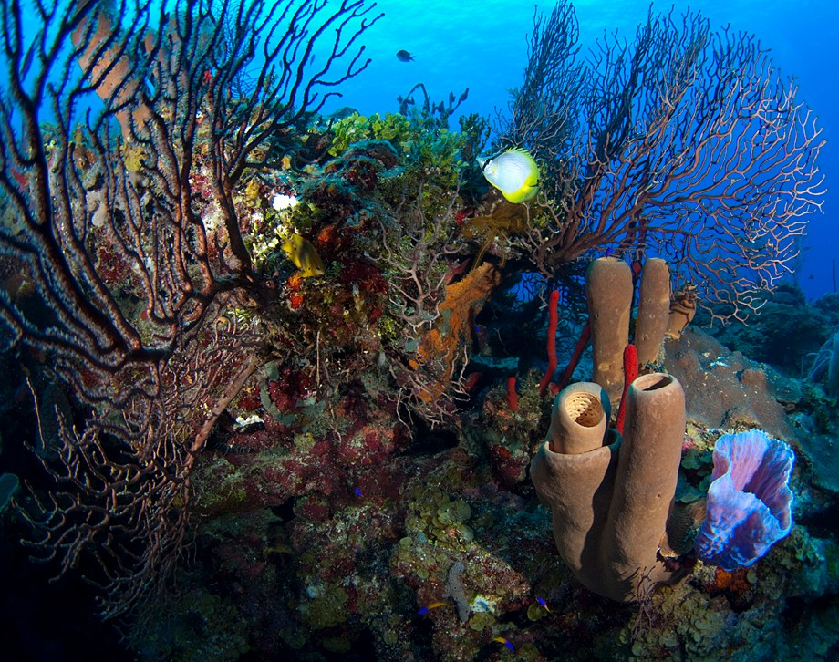 Coral+form+for+snorkle-compressman.jpg