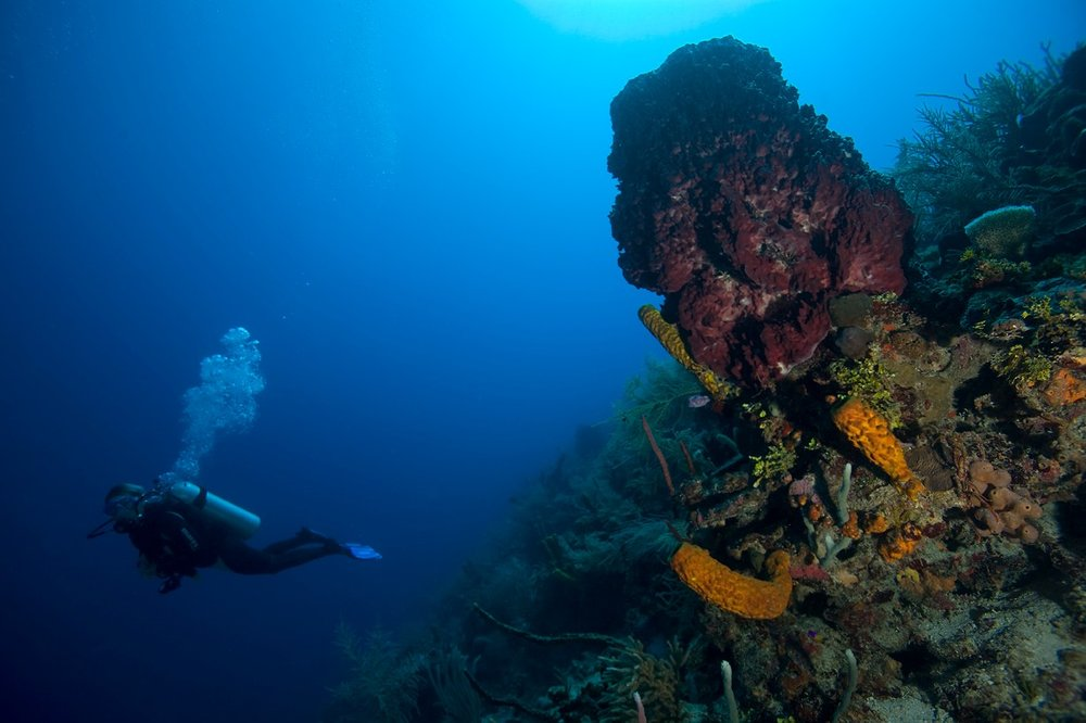 Belize Scuba Packages
