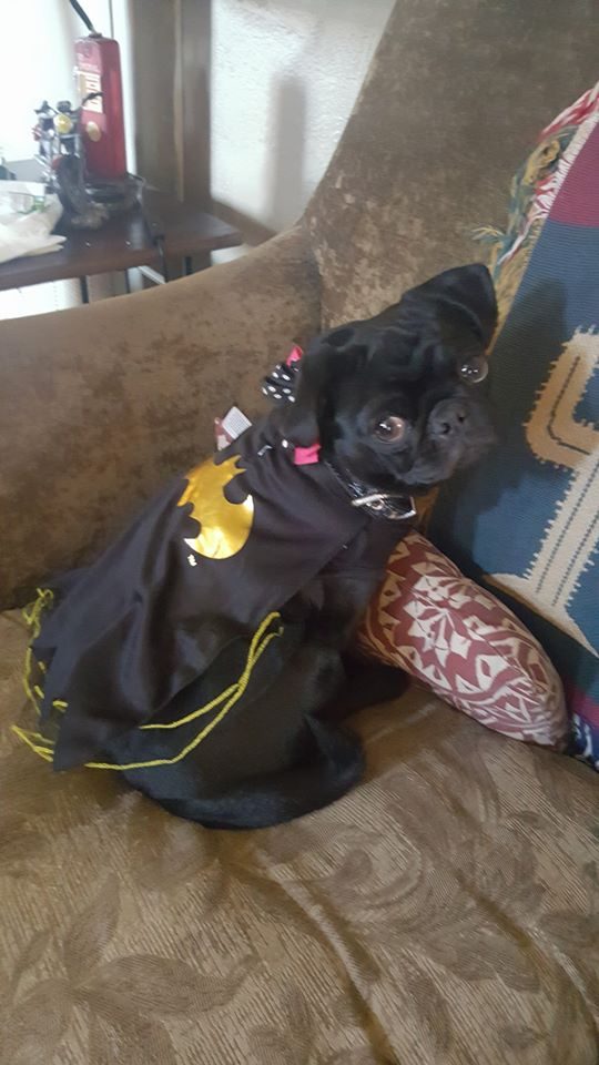 Princess Pearla as Batgirl