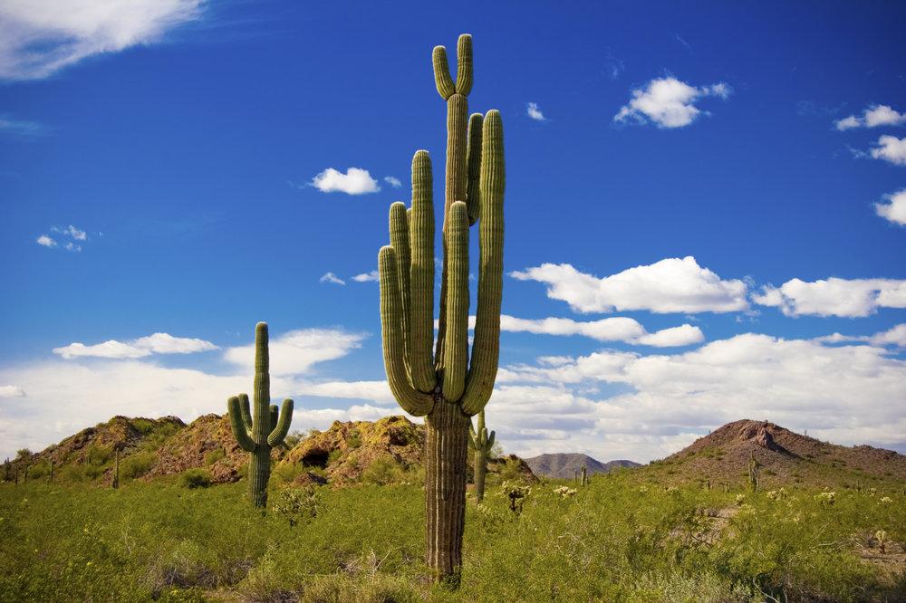 arizona cactus.jpg