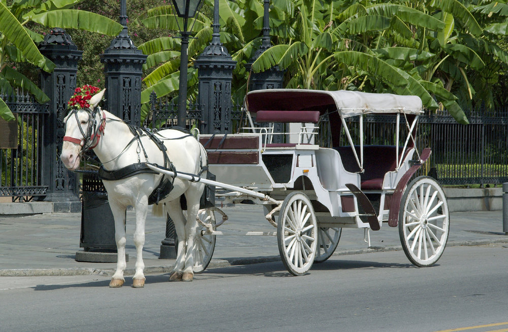 Horse & Carriage.jpg