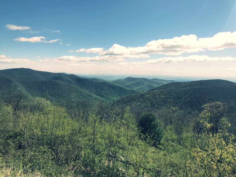 Scenic Overlook on the Skyline Drive