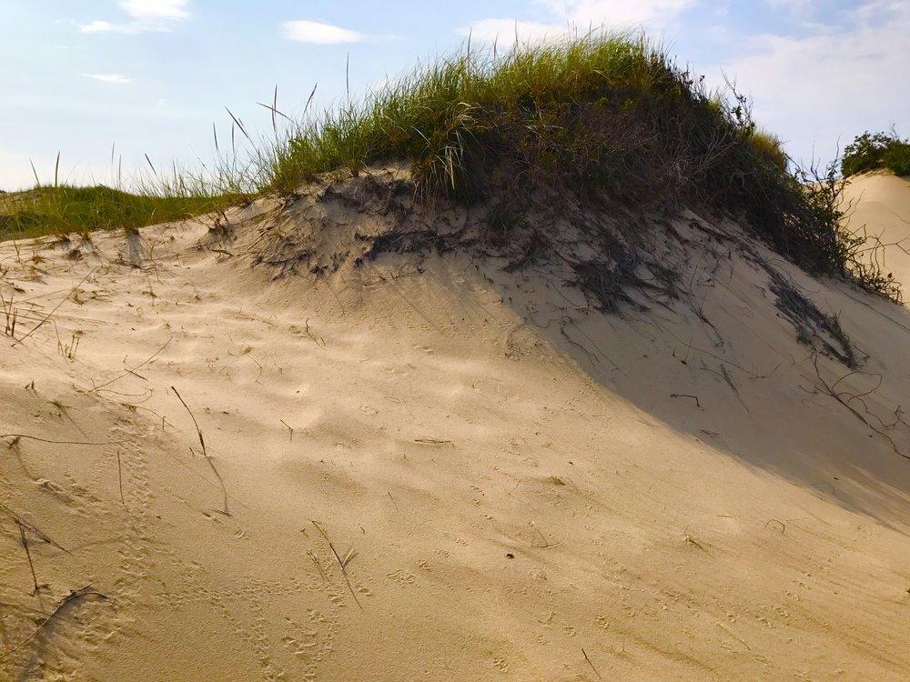 Provincetown Sand Dunes