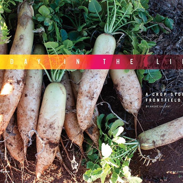 Our Mothers Day buns sale has been huge! Order by Saturday night to receive all three editions of #cropstories for $20! Link in profile.  #my_athens #athensfarmersmarket #cookbooks #magazines #recipes #farmers