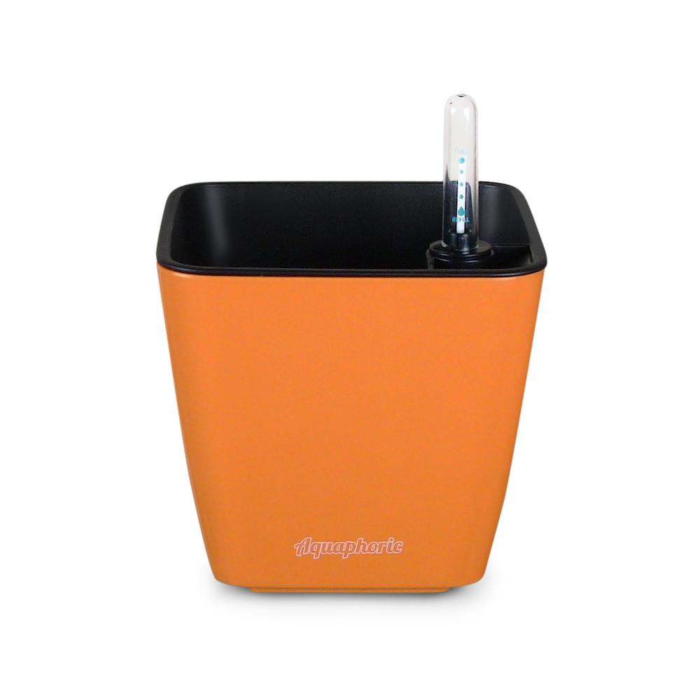 1 - Orange.JPG