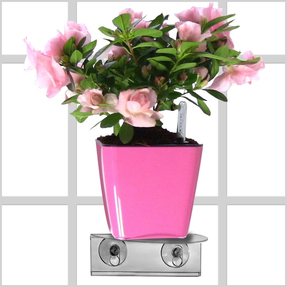 1 pink.jpg