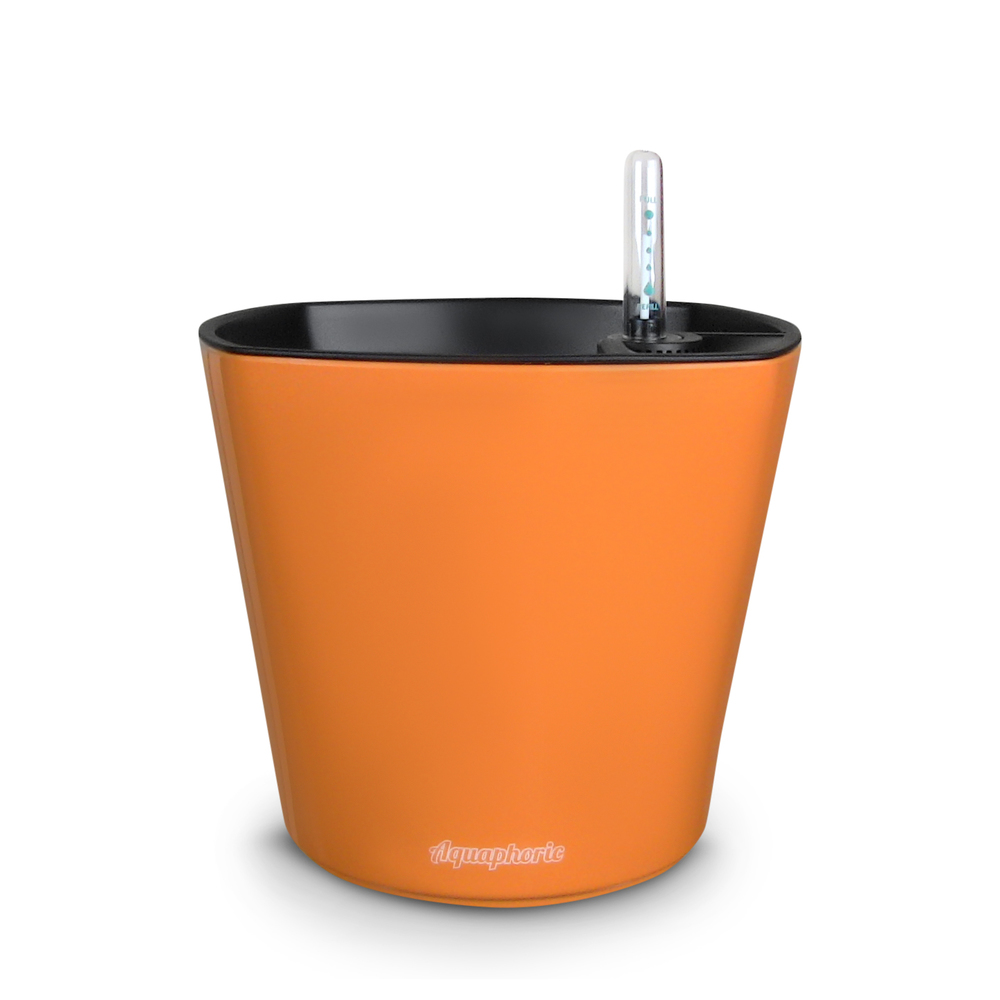 1 Orange.JPG