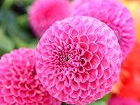 flower1 200-150.jpg