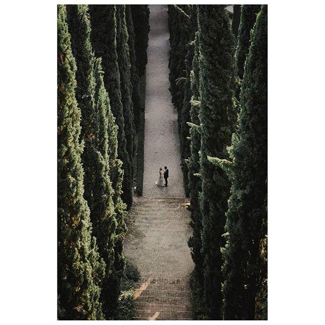 C + P Wedding in Verona - Italy  www.mariocasati.com  #instawed  #gardasee #bridestory #piazzadante #piazzadeisignori #giardinogiusti #giardinogiustiverona #chicweddingverona #italianweddingphotographer # #creativewedding #weddingverona #fotografoverona  #weddingdress #bestweddingphotography #matrimonioverona #matrimonio #weddingcouple #weddingitaly #weddingdetails #wedding #verona #weddingphotography #mariocasati