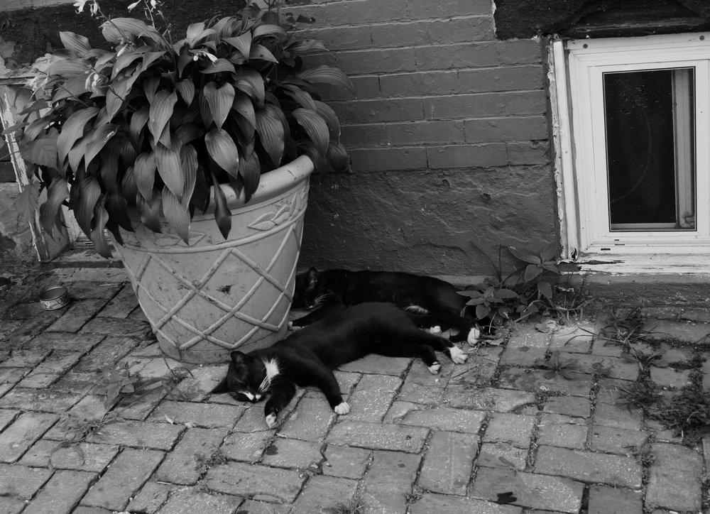 Cats Sleeping_Philadelphia (1).jpg